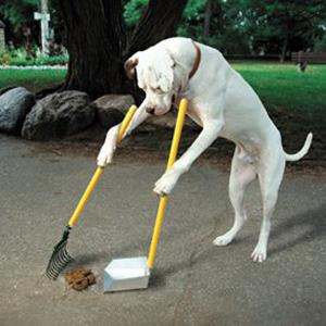 DogPoop.jpg